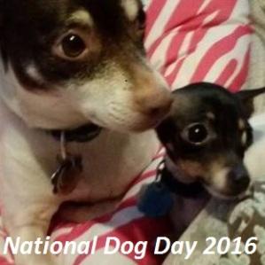 nationaldogday2016